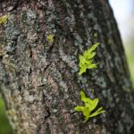 Aktuelles - Green Palatina